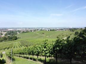 Panoramawanderung östlich von Heilbronn