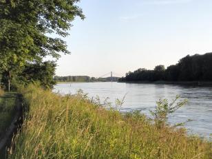 In der Ferne ist die Autobahnbrücke der A61 über den Rhein zu sehen