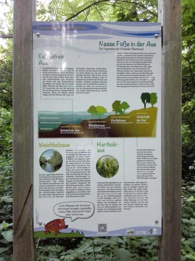 Infotafel zur Strukturierung des Auwaldes in Abhängigkeit der Häufigkeit von Hochwasserständen