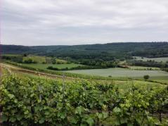 Blick über die Weinberge hinunter zum Kohlbachtal