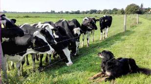Und schließlich starrt die halbe Herde auf Doxi