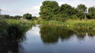 Wasserreiche Landschaft am Wynhamster Kolk