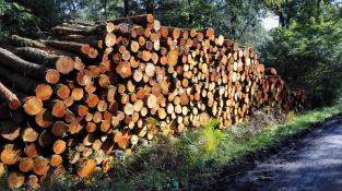 Rot leuchtet das aufgestapelte Holz im Wald neben der Halde