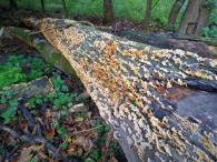 Fleißige Pilze bei der Zersetzungsarbeit