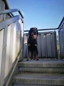 Doxi will auch auf den Turm