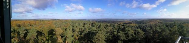Panoramablick vom Feuerwachturm auf dem Farnberg Richtung Norden