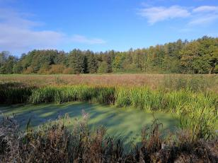 Biotop am Rand der Lochterheide