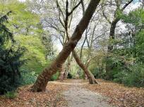 Zwei gekreuzte Bäume im Schlosspark
