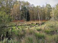 Feuchtgebiet im Wald