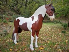 Wem gehört denn dieses hübsche Pferdchen?