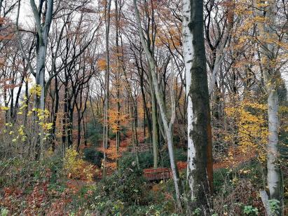 Wald am Rand von Castrop-Rauxel