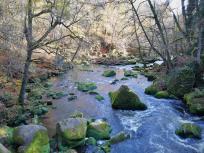 Die Irreler Wasserfälle von der großen Holzbrücke aus gesehen