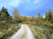 Hinter den Weinbergen beginnt der Wald