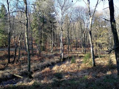 Die Bäche mäandern durch den Wald