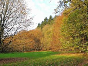 Herbstlich bunter Wald beim Abstieg hinunter nach Glüder