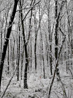 Durch den Schnee von Büttgen nach Neuss
