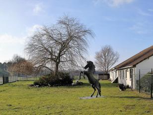 Neben dem Pferd: Mini-Kängurus