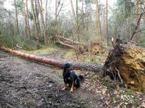 Hier werden die Waldarbeiter noch viel zu tun haben