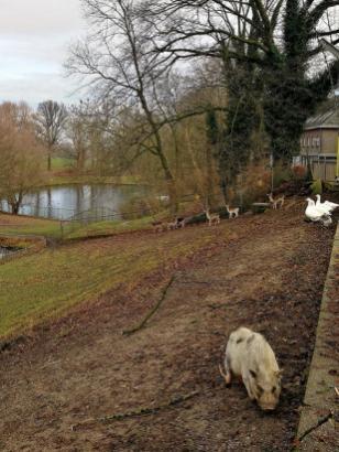 Klostergarten mit Tieren neben der Anlage
