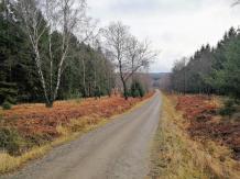 Waldweg hinter dem Struffelt