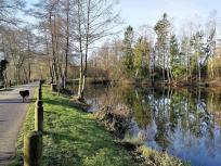 Teich am Waldfreibad
