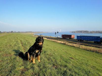 Doxi auf dem Rheindeich