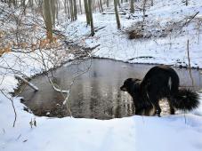 Doxi hat ein kleines Loch in das Eis auf dem Tümpel getrreten