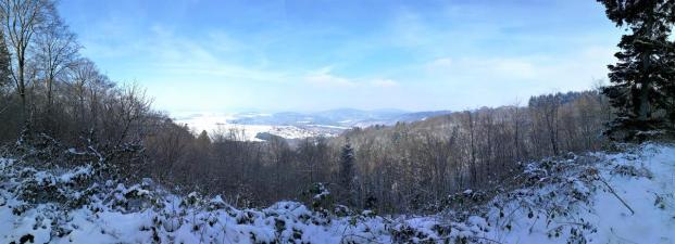 Panorama von einer Lichtung im Hochwald