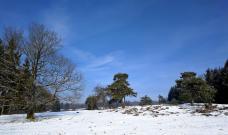 Heidelandschaft unter Schnee