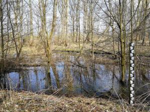 Die Auenlandschaft ist von Wasser durchzogen