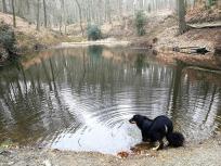 Doxi stärkt sich an einem der zahlreichen Waldseen
