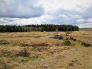 Am Übergang des Schwalmbachtals in den Truppenübungsplatz