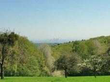 Von der Langenhainer-Hochfläche kann man zwischen den Bäumen hindurch auf die Skyline von Frankfurt blicken