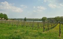 Blick vom Ortsrand Geisenheim zum Rhein