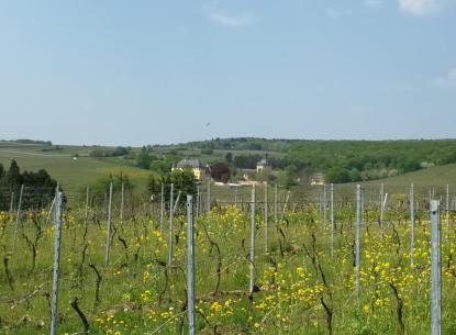 Das Schloss Vollrads oberhalb von Winkel
