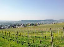 Blick von den Weinbergen bei Schloss Johannisberg hinunter nach Rüdesheim