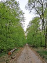 Im frisch ergrünten Wald oberhalb der Weinberge
