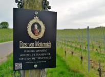 """In diesem Weinstock wird für den Sekt """"Fürst von Metternich"""" produziert"""