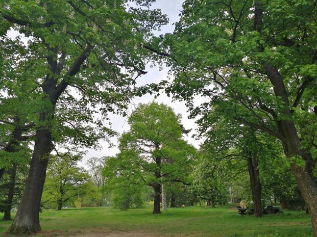Blick in den Schlosspark mit altem Baumbestand