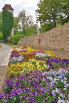 So ein süßes Arboretum