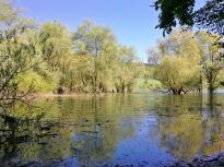 Feucht- und Sumpfgebiet am Zufluss der Itter