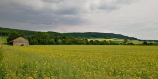 In den Feldern vor dem Asseler Wald