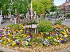 Blumenrondelll auf dem Domplatz