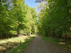 Im Arnsberger Wald