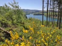 Oberhalb des Sees blüht der Ginster
