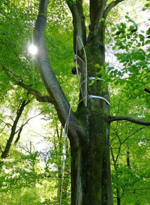 "Eine ""Baumharfe"" im Wald"