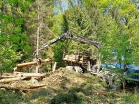 Hier werden frisch geschlagene Baumstämme aufgeladen