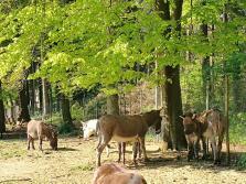 Kleine Esel-Herde im Ort