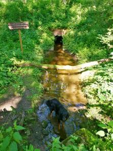 Der Sauerbach mit zahlreichen Nebenbächen durchzieht den Wald