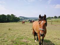 Pferde auf den Weiden am Reiterhof Krüdenscheid